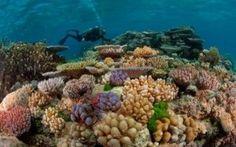 In Australia, la grande barriera Corallina sta morendo #grandebarrieracorallina #australia