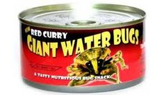#Oddities  Giant water bugs are an Asian delicacy that are served steamed or mashed into a spicy dipping sauce.  Not from Singapore for sure!