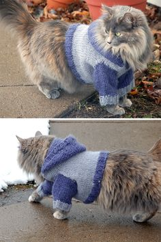 Free Knitting Pattern for Cat Hoodie - Cat sweater with hood, which is mostly decorative. Though many Ravelrers reported their cats liking the sweater, few tolerated the hood pulled over their ears. Designed by Kristin Roach. Knitting Patterns For Dogs, Free Knitting, Baby Knitting, Knitting Projects, Knit Dog Sweater, Cat Sweaters, Hoodie Pattern, Cat Pattern, Angora Cats
