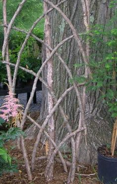 Saplings and Twigs Garden Trellis Natural plant trellis. save sturdiest and straight branches to nail or lash together and form a natural trellis to support vines or climbing plants