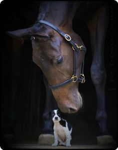 It's okay little buddy.horses sometimes take dogs or baby goats as pets and have been known to calm a high spirited horse down. Horses And Dogs, Animals And Pets, Baby Animals, Dogs And Puppies, Cute Animals, Big Horses, All The Pretty Horses, Beautiful Horses, Animals Beautiful