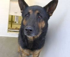 **THIS SAD FACED BOY NEEDS A FUREVER HOME.** No Christmas celebration for family dog dumped after 9 loyal years