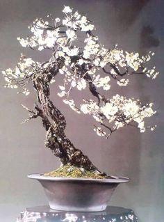 Cute Bonsai Trees Gardening Ideas For Your Backyard 44 Flowering Bonsai Tree, Bonsai Tree Care, Potted Trees, Mini Bonsai, Indoor Bonsai, Bonsai Garden, Garden Trees, Succulents Garden, Ikebana