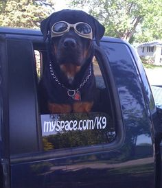 #Rottie - Funny #Pet #Pictures
