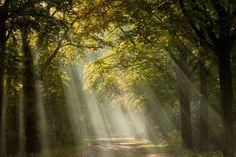 Lichtstralen geven je foto's een magisch effect. Deze lichtstralen worden ook wel zonneharpen of Sint-Jacobsladders genoemd. Voor het fotograferen van de lichtstralen heb je wel een paar ingrediënten nodig. Welke dit zijn, …