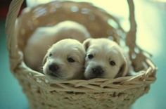 """# Are you ready for your daily dose of """"Awww?"""