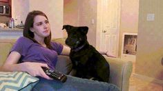 Cat Gifs and Dog Gifs http://catsdogsblog.com/