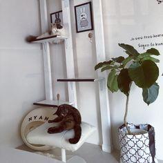 その他で、3LDK、その他の観葉植物/ぽて猫部/猫ばかりでごめんなさい。/猫部屋にて/賃貸でも楽しく♪/築30年賃貸…などについてのインテリア実例を紹介。