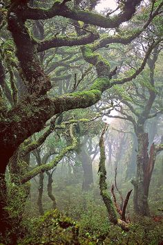 We thought we might see a hobbit behind every tree. Rainforest in Waikaremoana, New Zealand.