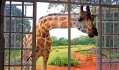 Kenya. A voyage to Kenya, Africa - Nairobi, Mombasa, Nakuru, Kisumu, Eldoret, Nyeri, Machakos, Meru...