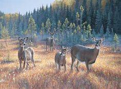 Bog Trek-Whitetail Deer by Jim Kasper