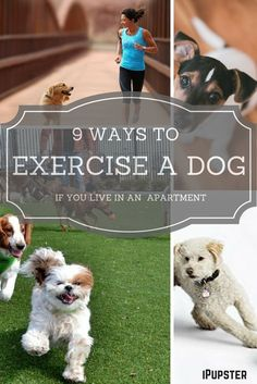 Living in an apartment and working a full time job with no time to exercise your dog?