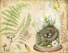 Terrarium by Susan Winget. Courtney Davis, Nature Journal, Vintage Greeting Cards, Mail Art, Vintage Prints, Vintage Art, Botanical Illustration, Flower Art, Watercolor Art