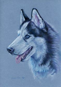 Siberian Husky by LucieOn