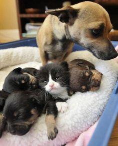 子犬たちのセンターをとる猫
