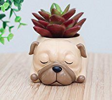 Dog Breed Succulent Planter Pots Small Ceramic Plant Pots -Great for mini succulents and cacti or decorative candles A small Drain Hole on the Bottom Size cm Porcelain Ceramic Cactus Flower, Flower Pots, Tea Light Candles, Tea Lights, Ostrich Feather Centerpieces, Mini Vasos, Carlin, Ceramic Plant Pots, Water Beads