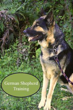 German Shepherd Dog Training Tips | DogVills.c
