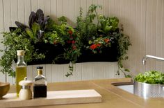 It's possible to take an indoor garden and revel in each of the benefits of beautiful plants. 1 thing you might discover useful for your indoor herb garden is having the ability to individually eliminate each herb so that you… Continue Reading → Herb Garden Kit, Herb Garden In Kitchen, Garden Ideas, Kitchen Plants, Kitchen Gardening, Kitchen Sink, Garden Tools, Design Jardin, Garden Design