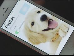 Say 'treat!' PetBot will send you pet selfies while you and your furry friend are apart (August 2015)