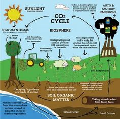 The series of processes by which carbon compounds are interconverted in the environment, chiefly involving the incorporation of carbon dioxide into living tissue by photosynthesis and its return to the atmosphere through respiration, the decay of dead organisms, and the burning of fossil fuels.