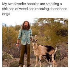 Them Mountain dogs