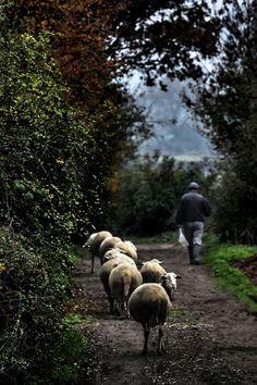 Lord Is My Shepherd, The Good Shepherd, Nature Animals, Farm Animals, Baa Baa Black Sheep, Human Soul, Farm Life, Life Is Beautiful, Beautiful Creatures