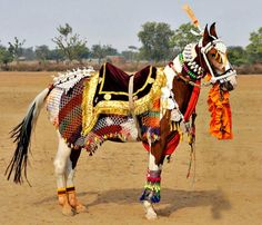 Cultural traditions are fascinating. Except for rough training methods and horrific thorn bits:( Marwari stallion in full costume. photo: Michael Huggan.