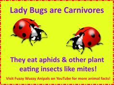 This animal quiz has 3 questions about Ladybugs, also known as Ladybird Beetles. The questions are - Ladybugs do this when in danger. Science Trivia, Animal Science, Science Geek, Science Facts, Science For Kids, Animal Facts For Kids, Fun Facts For Kids, Fun Facts About Animals, Wtf Fun Facts