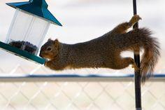 9 Tips to Squirrel Proof Bird Feeders