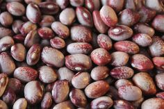 Amish Gnuttle Bean - Annapolis Seeds - Heirloom and Open Pollinated Seeds - Grown in Nova Scotia Canada Bean Garden, Bean Varieties, Bean Seeds, Bush Beans, Seed Bank, Edible Garden, Nova Scotia, Amish, Fruit