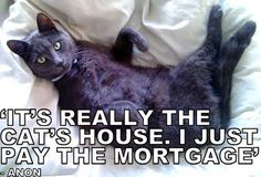 It's really the cat's house. I just pay the mortgage.