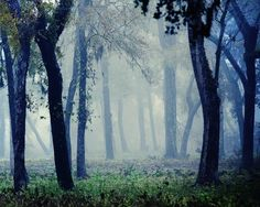 """""""Fairytale"""".....fog mist trees woods forest blue by slightclutter, $40.00; this photographer, Katya Horner, is based in Houston, Texas, but travels the country taking the most exquisite pictures. I have a few, and hope to eventually collect ALL of my faves, having them professionally matted/framed. In addition to being drop dead GORGE, they remind me of my dad. <3 <3 <3 Check her out on Etsy, at SlightClutter! She also auctions prints off regularly on Tophatter!"""