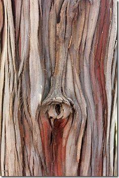 Patterns In Nature, Textures Patterns, Wood Bark, Nature Tree, Tree Bark, Texture Art, Natural Texture, Botanical Illustration, Oeuvre D'art