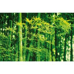 Ideal Decor 45 in. x 0.25 in. Bamboo in Spring Wall Mural