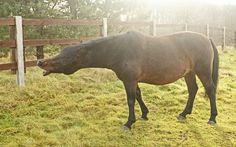 Browar - a horse that says a lot - Huculs horses in the Hotel & Resort SPA Termy Medical WARMIA PARK in Poland (Warmia and Masuria, Pluski near Olsztyn)