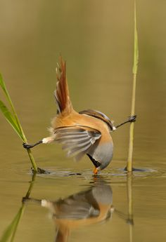 Bird Photography – 25 Brilliant Examples - They told me their would be hard days, but this is ridiculous!