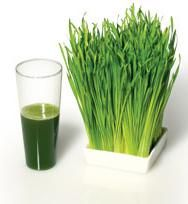 Wheatgrass is often used for juicing, or added to smoothies or tea. Proponents say that wheatgrass has numerous health benefits, but there are no significant research studies to support these claims. Wheatgrass is usually grown in soil or water and consumed raw, which means it could be contaminated with bacteria or mold.