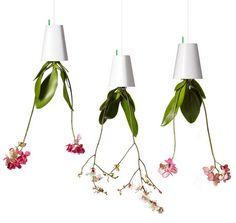 Smart Design Solutions for Urban Gardeners – Medium