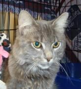 Trevor is this week's Featured Pet. Learn more about this great cat in need of a home. www.eviealo.com