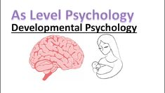 What are developmental milestones? In this lesson we will learn what developmental milestones are and what they mean for the psychological development of the. Early Education, Early Childhood Education, A Level Revision, Psychology A Level, Daycare Forms, Developmental Psychology, Early Learning, Child Development, Children