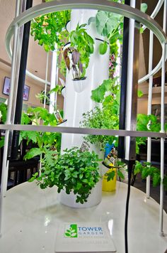 The newest addition to our space: the gorgeous tower garden #freshherbs