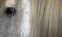 Health professionals say horses can reflect our emotions to bring relief from addiction and stress