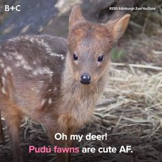 These little deer will steal your heart.