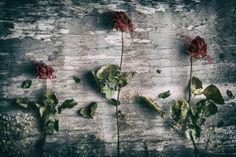 Dead Roses and a Fly by Petri Damstén