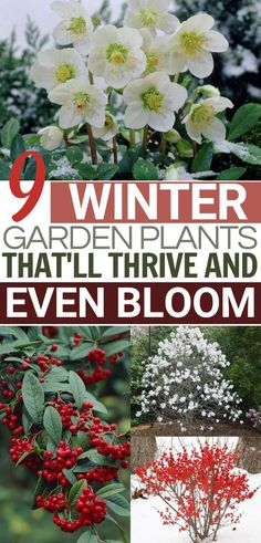 Winter Garden Flowers | Want a winter garden design idea that actually blooms in the cold? These resilient plants are sure to add tons of color to your outdoor winter garden. #garden #gardening #greenthumb #gardendesign #wintergarden #gardens #flowers Garden Art, Garden Plants, Garden Design, Garden Ideas, Dream Garden, Winter Plants, Winter Garden, Brick Patterns Patio, Chinese Garden
