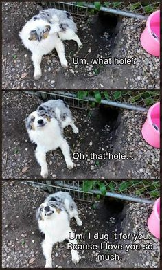 These extra-wholesome dog memes are giving us new life. Check out some of our favorite dog memes now and don't forget to pin your favorite! Read More: Funny Animal Memes Of The Day - 32 Pics Funny Animal Jokes, Funny Dog Memes, Cute Funny Animals, Cute Baby Animals, Funny Cute, Funny Dogs, Memes Humor, Dog Humor, 9gag Funny