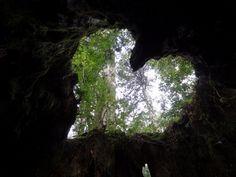 [Under the Japanese Jomon cedar tree] - 鹿児島・屋久島・縄文杉 - Yakushima, Kagoshima, Japan