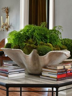 Bunny Williams | clam + moss + fern...another use for my large shell