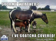 We've got YOU covered for all you equestrian needs!  Saddlers Row 888/710-7171