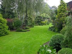 Landscape backyard with privacy and serenity. Mixed border with dwarf conifers Evergreen Landscape, Evergreen Garden, Privacy Landscaping, Garden Landscaping, Landscaping Ideas, Luxury Landscaping, Landscaping Company, Back Gardens, Outdoor Gardens